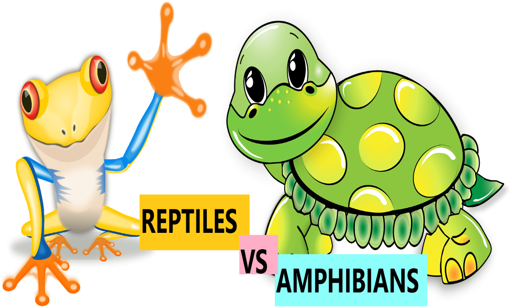 11 Difference Between Reptiles And Amphibians & Characteristics