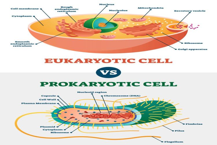 20 Difference Between Prokaryotic And Eukaryotic Cells And Their Characteristics
